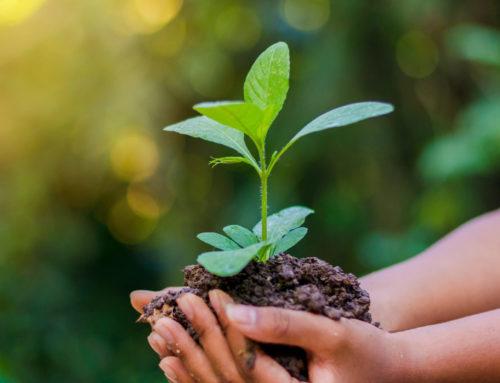 ARTICLE – Sensibiliser vos collaborateurs aux écogestes :  une opportunité pour votre entreprise